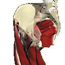Interactive Hip