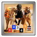 Greyhound Race Grader