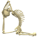 3D Anatomy for Yoga - The Essential Guide