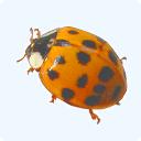 Ladybug Mixer Pro