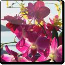 Summer Flowers ScreenSaver