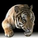 Tiger Free Envelopes