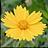 Neat Image Pro+