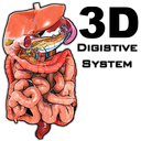 3D Digestive System