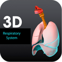 3D Respiratory System