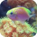Fish Tank Free