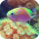 Fish Tank HD