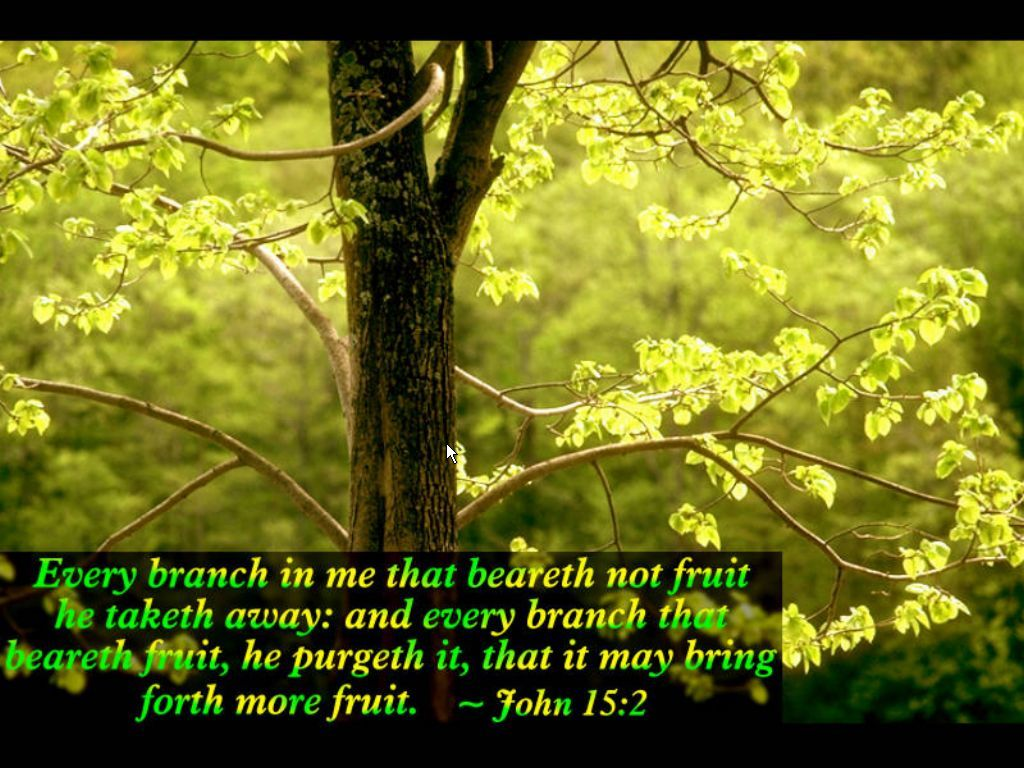 spring wallpaper with bible - photo #26