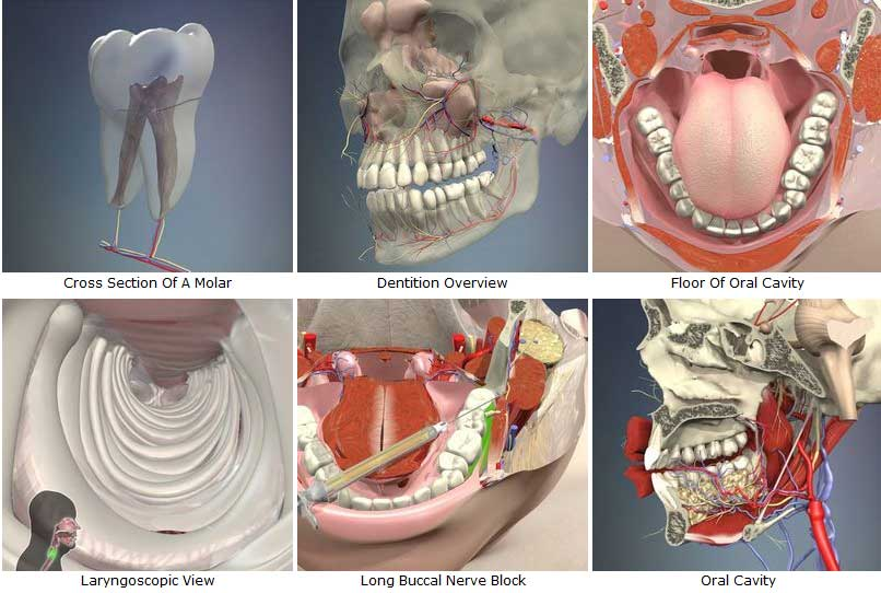 3d Human Anatomy Software Torrent