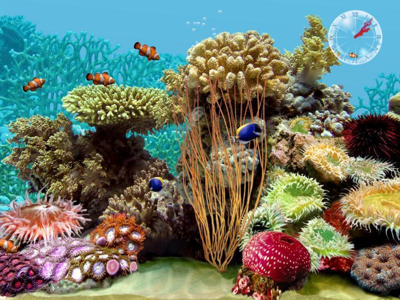 3d tropical fish aquarium screensaver software informer for 3d fish tank