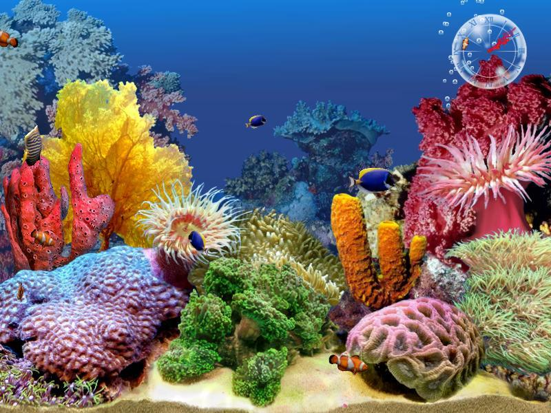 3D Tropical Fish Aquarium Screensaver : 3D Tropical Fish Aquarium ...