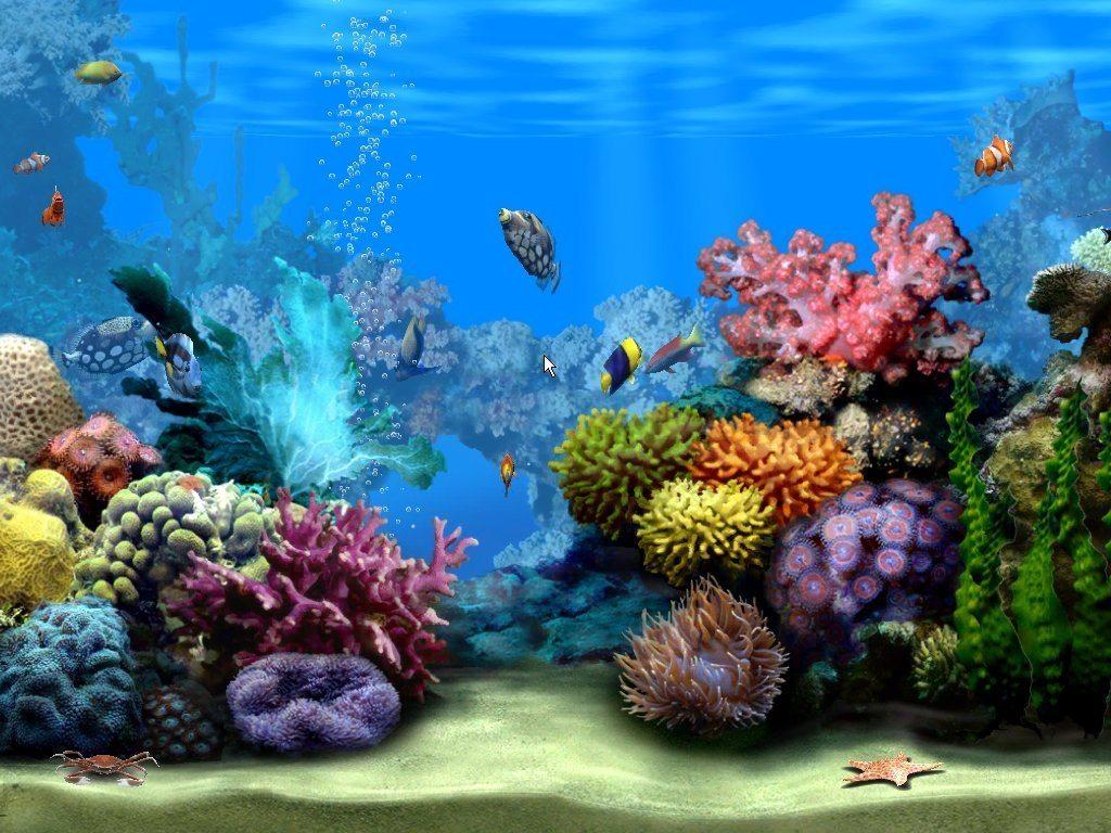 free fish tank screensaver for mac