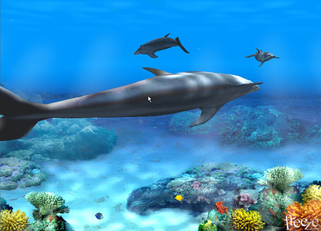 dolphins wallpaper 3d hd images pictures becuo