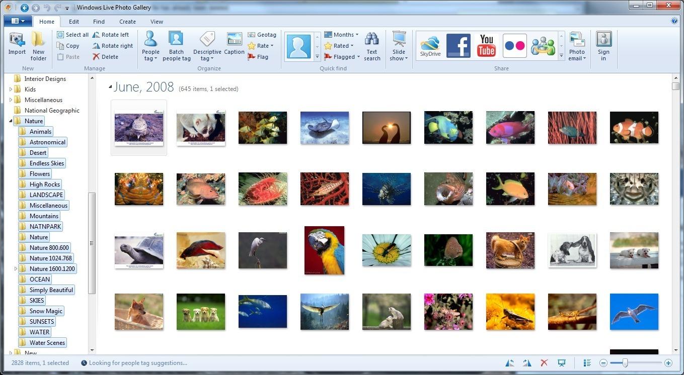 Windows Live Photo Gallery: windows-live-essentials2.software.informer.com/screenshot/240572