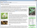 A Wiki Article