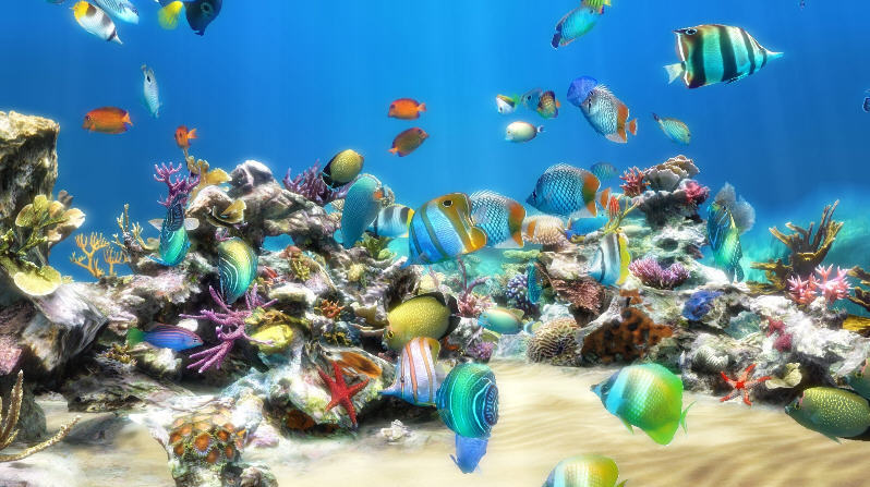 live aquarium hd 1 0 screensaver window screenshots for live aquarium ...