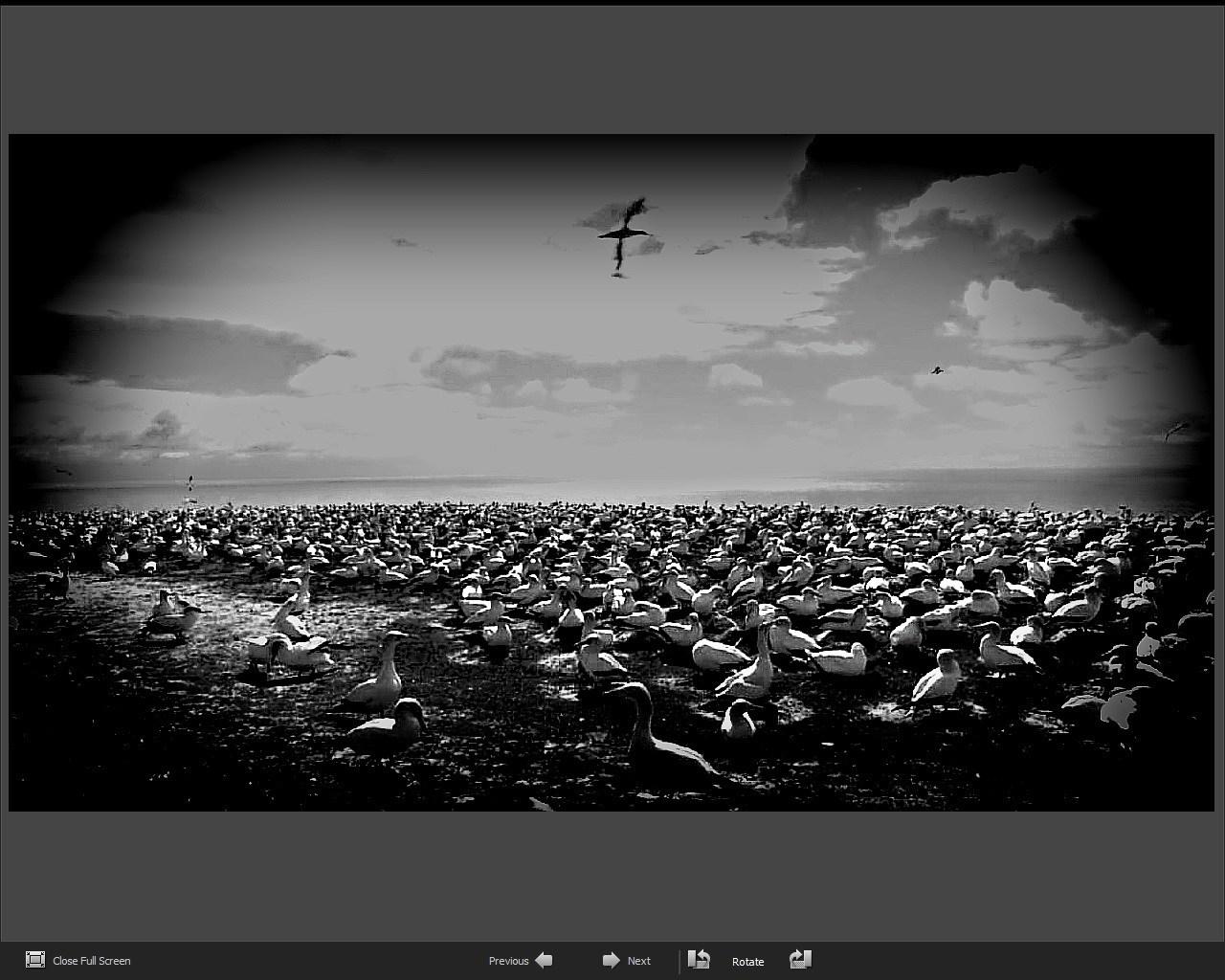 Full Screen View