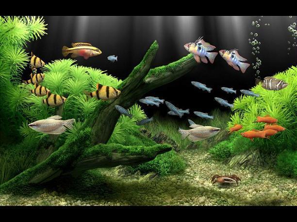 Another aquarium