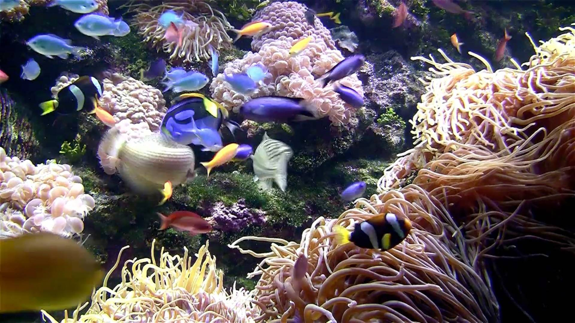 Coral Reef Background Fish Tank Coral reef background fishCoral Reef Fish Background