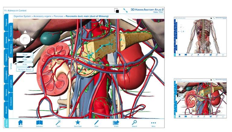Visible body human anatomy atlas v3 01