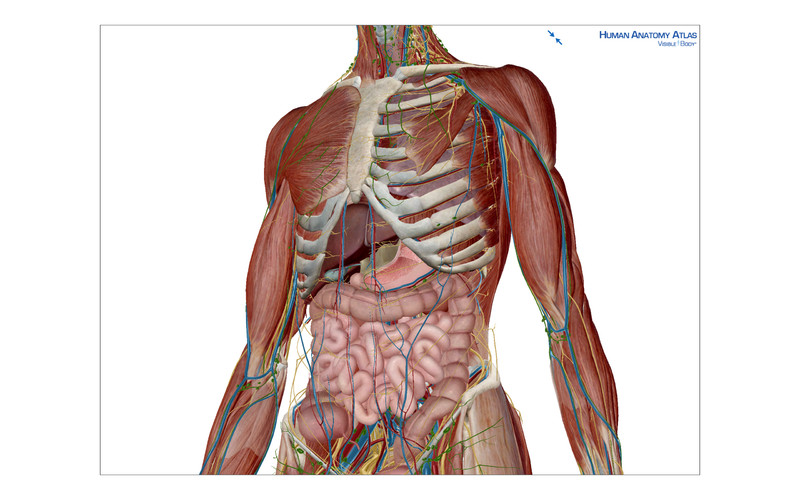 Atlas Anatomy 3d