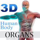 3D Human Body Organs Reference