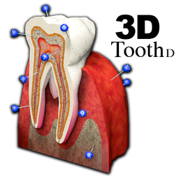 3D Tooth - St