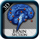 Brain Section 3D