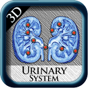 Urinary System 3D pins