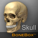 BoneBox Skull Viewer