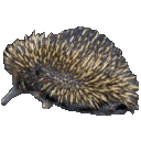 Echidna Movie Viewer
