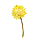 Dandelion - Wishes brought to you -