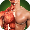 Human Anatomy 3D Bones And Muscles GOLD