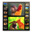 Photo Movie Pro - Slideshow Video DVD Lite