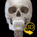 Skeletal System - 3D Atlas of Anatomy - Bones of the human skeleton