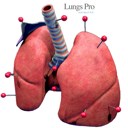 LungsProAnimated