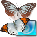 3D Desktop Butterfly Screen Saver