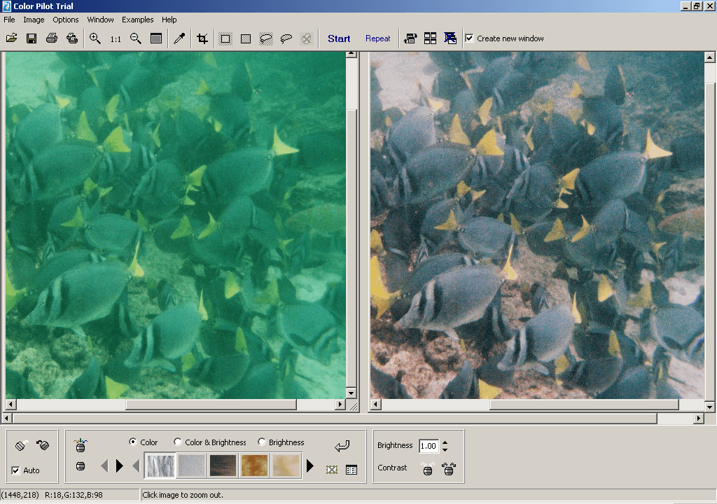 Scanned Photo (Before&After Enhancement))