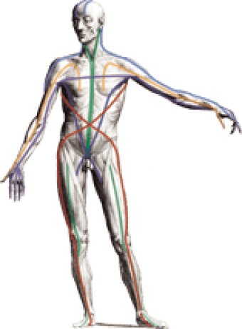 Anatomy Trains Download The Anatomy Trains Is A Revolutionary