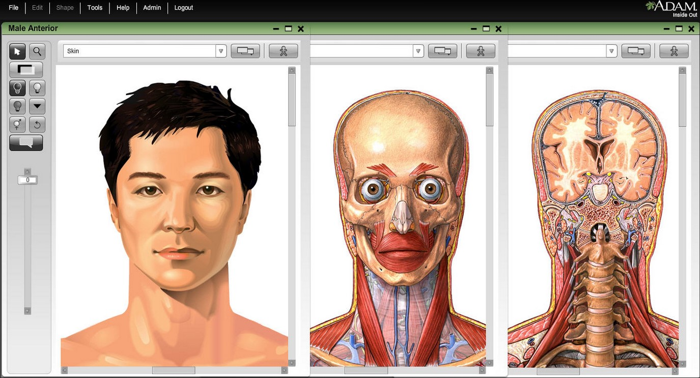 adam interactive anatomy 4.0 free download