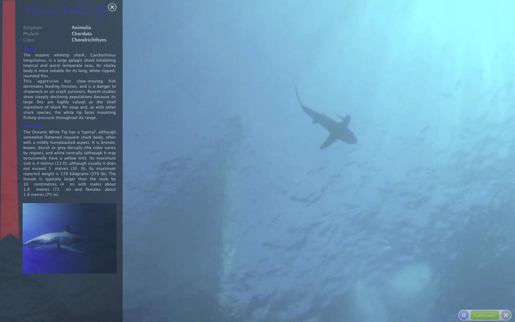 Shark info