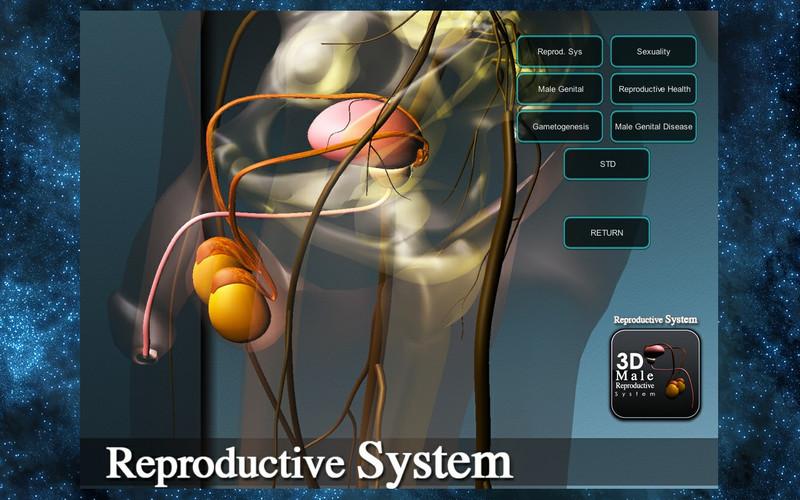 3D Reproductive System screenshot