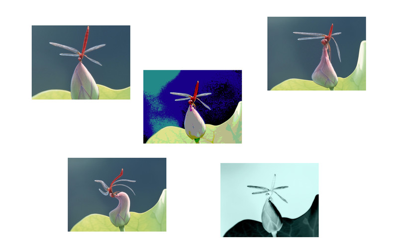 Photo Effects (Lite) screenshot